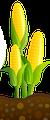 Норма висіву цукровой кукурудзи